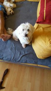 Hunde Tagesbetreuung mit
