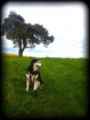 Huskymischling Molly