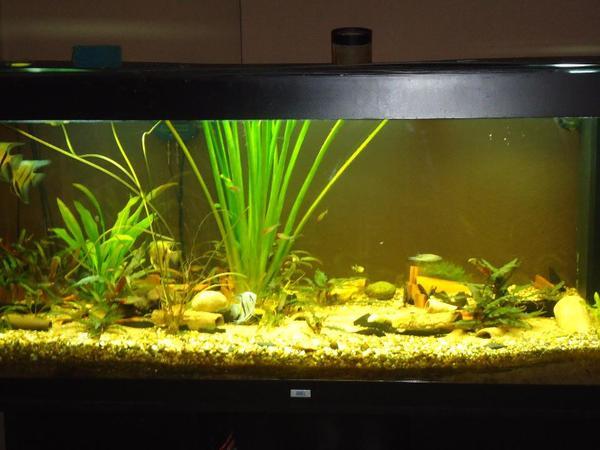 aquaristik in rosenheim oberbayern kaufen bei deinetierwelt. Black Bedroom Furniture Sets. Home Design Ideas