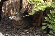 Katze Bruna sucht