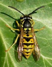 KILLTEC Fliegenfallen Wanzenvernichtung Wühlmausvernichtung Nagerabwehr