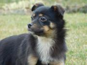 Lassie sucht liebevolles