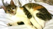 Liebe Glückskatze Katti