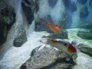 Mitarbeiter/in Aquarium