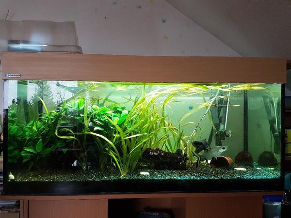 aquarium mp  neu und gebraucht kaufen bei dhd24com