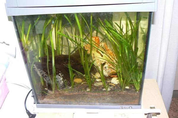 nano aquarium tetra in n rnberg fische aquaristik kaufen und verkaufen ber private kleinanzeigen. Black Bedroom Furniture Sets. Home Design Ideas