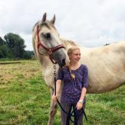 Nettes Reitbeteiligungspferd gesucht