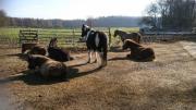 Ponyreiten und mehr -