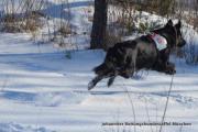 Rettungshundestaffel sucht Nachwuchs-