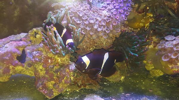 Aquaristik in leinfelden echterdingen bei deinetierwelt for Fische gartenteich geeignet