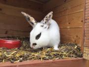 Schönes Kaninchen zu