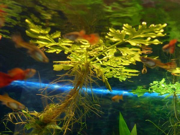 Sehr schöne und » Fische, Aquaristik
