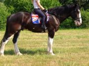 Shire Horsewallach