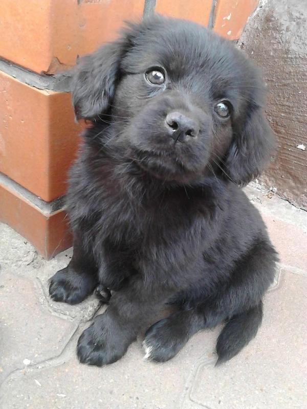 S 252 223 E Shih Tzu Spitzterrier Mischlingswelpen In Osternienburg Hunde Kaufen Und Verkaufen 252 Ber