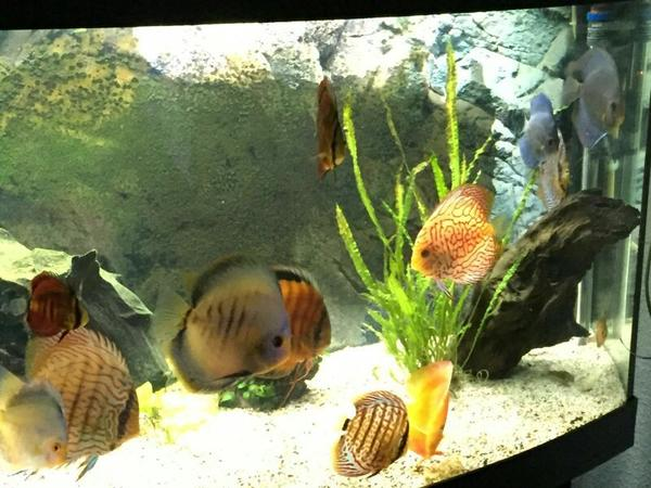 Süßwasser Aquarianer Whatsapp » Fische, Aquaristik