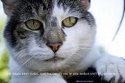 Tierkommunikation/Tiergespräch mit