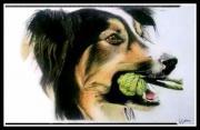 Tierportrait Tierzeichnung Zeichnung
