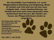 Tierschutzverein sucht Pflegestellen für Hunde