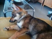 Traumhund sucht Traummenschen