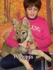 tschechoslowakisher wolfshund