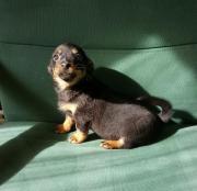 unser kleines Hundemädchen