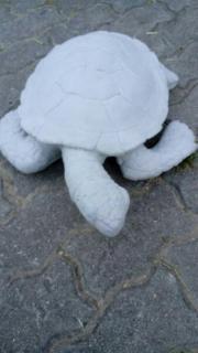 Verkaufe Wasserschildkröte aus