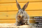 Verschiedene Kaninchen