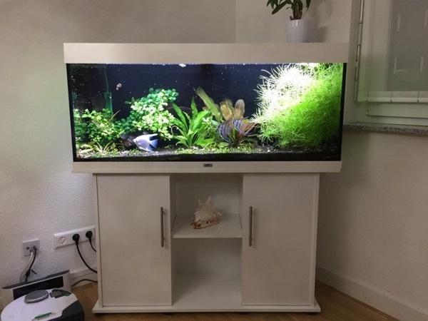 Eckaquarium kaufen eckaquarium gebraucht for Aquarium gebraucht
