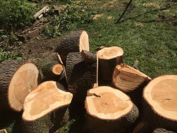 zedernholz als brennholz in mannheim holz kaufen und verkaufen ber private kleinanzeigen. Black Bedroom Furniture Sets. Home Design Ideas